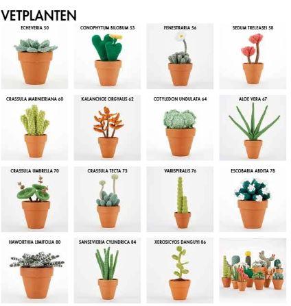cactussen haken inhoud deel 2